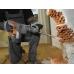 Отбойный молоток AEG PM 3